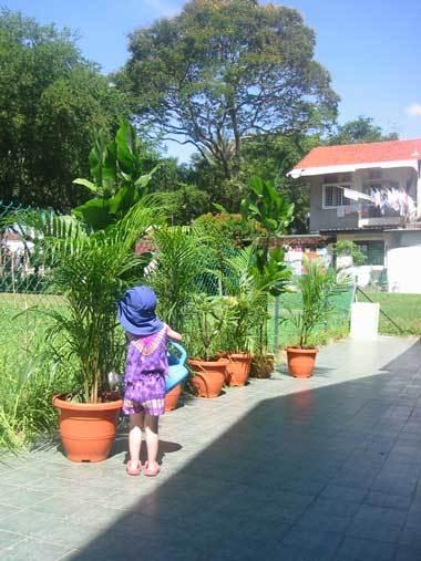 Garden_violet